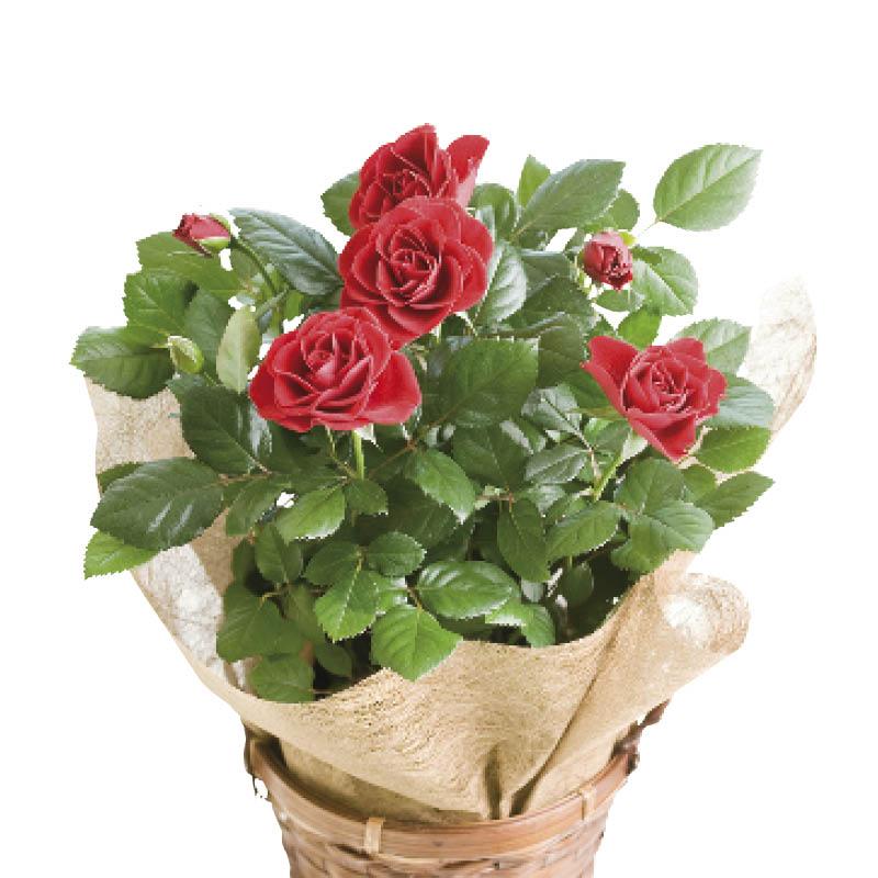 Оптовая, подарки и цветы с доставкой в австралию